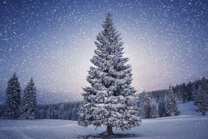 christmas tree_680x454
