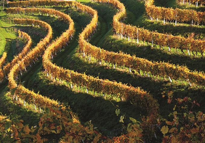 vinska klet jerzualem ormoz